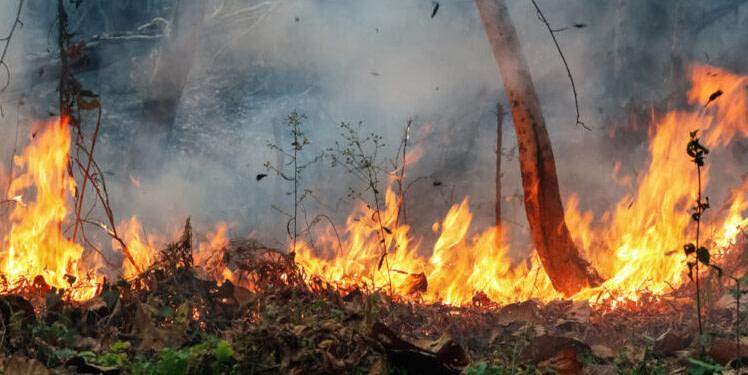 Tunisie : 190 hectares de végétations forestières ravagées par le feu