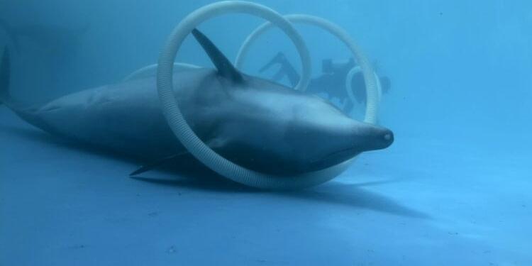Échouage record de dauphins sur les côtes françaises
